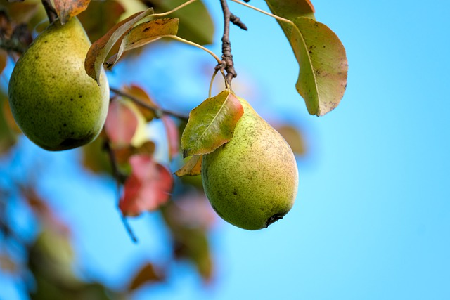 What are the benefits of Pear?